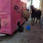 Horse Outside Pink Horsebox