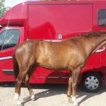 Red Horsebox with Horse